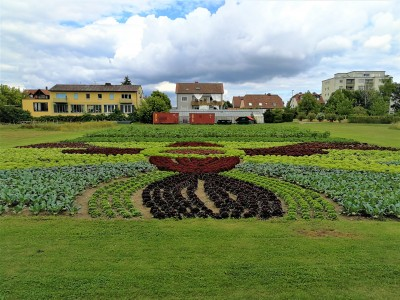 Salatblume Touristinfo Stadt Kitzingen