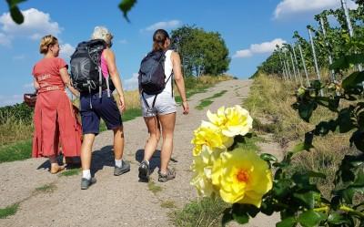 Führung - Kräuter küsst Wein Touristinfo Kitzingen
